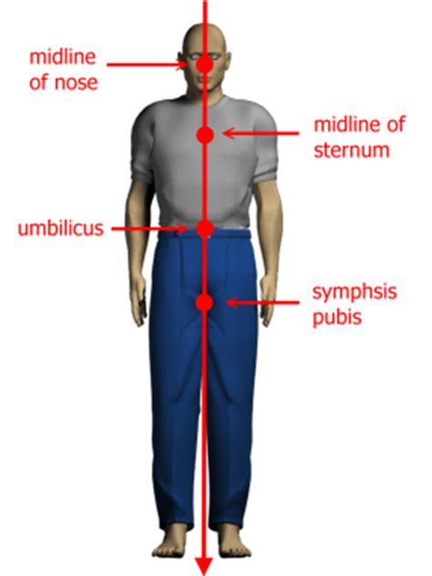 Plumb Line Assessment by Kinesiology Ntupt