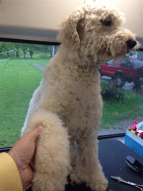 grooming ky big gallery aussie pet mobile bluegrass aussie pet mobile bluegrass