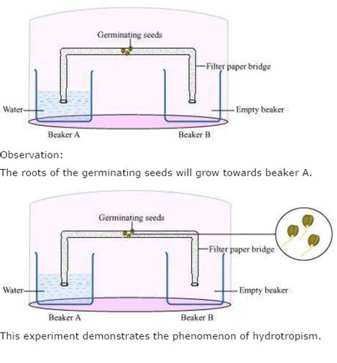 design experiment to demonstrate hydrotropism ncert solutions for class 10 science chapter 7 control and