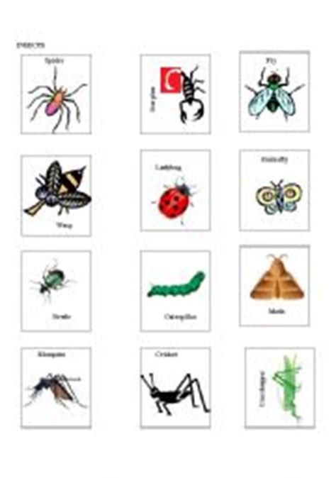 printable insect flash cards english teaching worksheets bingo
