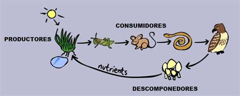 cadena alimenticia acuatica descomponedores cadena alimentaria y red alimentaria que son niveles y red