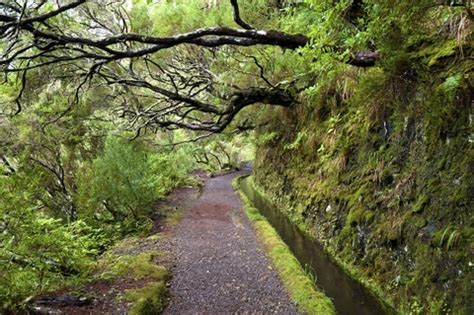 laurisilva – the laurel forest of madeira   tourist maker