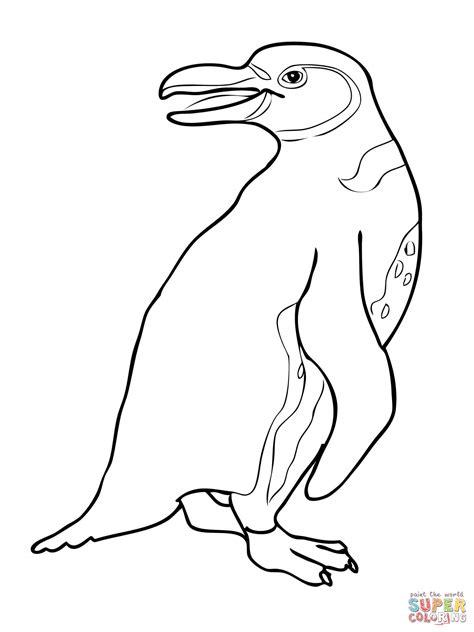 galapagos penguin coloring page galapagos penguin coloring page free printable coloring
