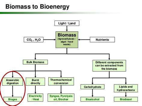 workshop 8 carbohydrates and lipids cambridge jan 14 bioenergy from plants and algae