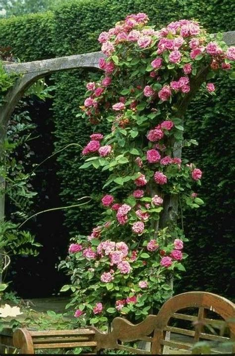 ideas for climbing rose supports climbing roses are fragrant i like this support structure for the climber garden