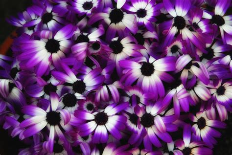 purple flower names and pictures beautiful flowers