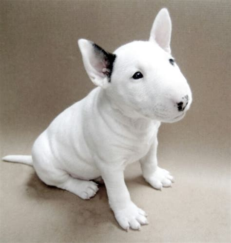 what of was spuds mackenzie 17 best images about spuds mackenzie on bud light my and ls