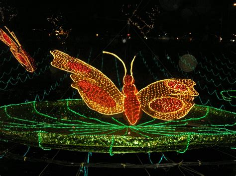 Outdoor Butterfly Lights - file butterfly lights christmas decoration jpg wikimedia commons