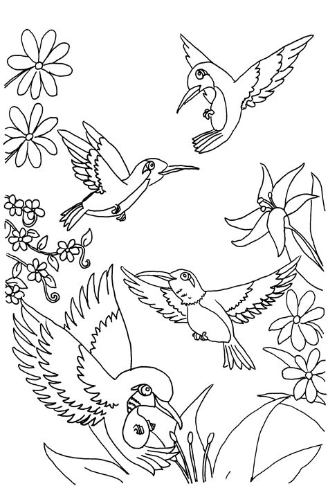 free printable coloring pages free printable hummingbird coloring pages for
