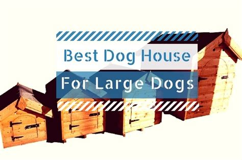 best dog houses for large dogs best dog house for large and xl dogs 2018 review guide find the best outdoor