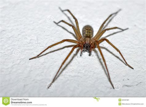 white house spider house spider stock image image 23187381