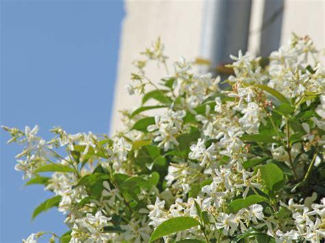 piante in vaso da esterno resistenti al freddo piante invernali da vaso per esterno che resistono al