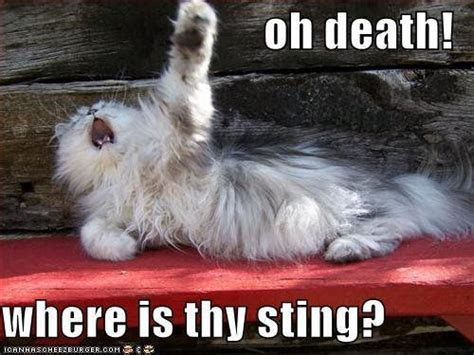 Drama Queen Meme - drama queen funny humor cat lolcat meme soliloquy isn