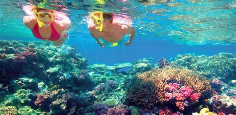 great barrier reef 3 day tour from the gold coast book - Glass Bottom Boat Tours Gold Coast