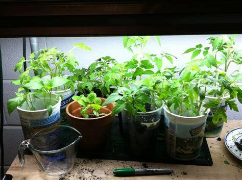 40 Best Indoor Vegetable Gardening Images On Pinterest Indoor Gardening Vegetables