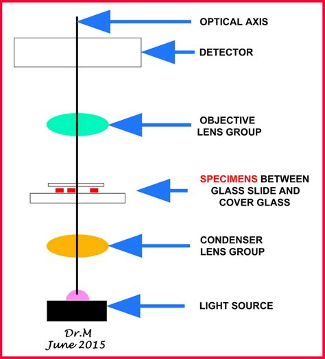 how does a light microscope work kinds of light microscopes dr m on science research