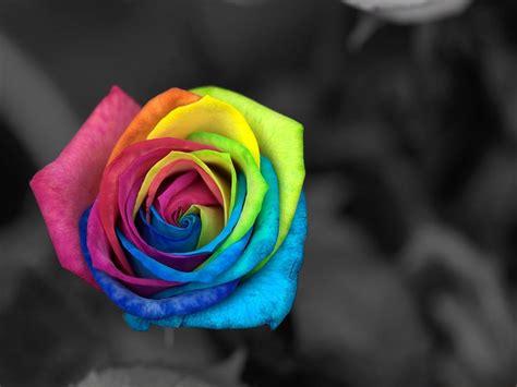 colorful stuff gorgeous rainbow coloured stuff
