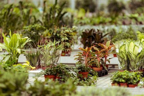 pflegeleichte pflanzen vorgarten pflegeleichte pflanzen pflegeleichte pflanzen winterhart
