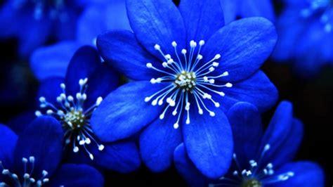 Blue Flowers by Beautiful Blue Flower Weneedfun