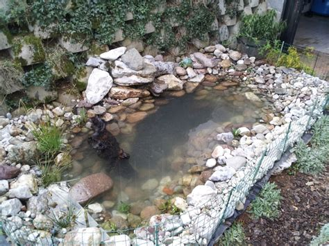 How To Build A Backyard Pond by How To Build A Pond Info Turtle