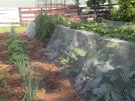 Our Garden Last Year Protecting Our Vegetable Plants With Squirrels In Vegetable Garden
