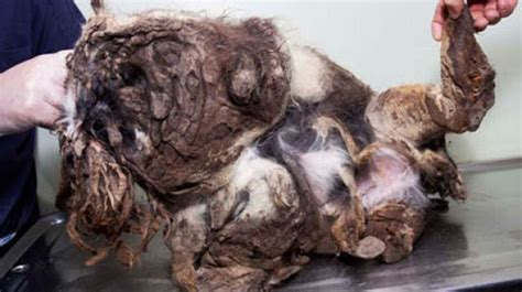 dog rescue matted fur 2 conservative post
