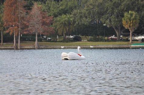 swan boats orlando fl lake eola swan boats picture of lake eola park orlando