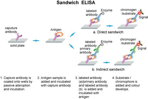 Elisa Guide Creative Diagnostics