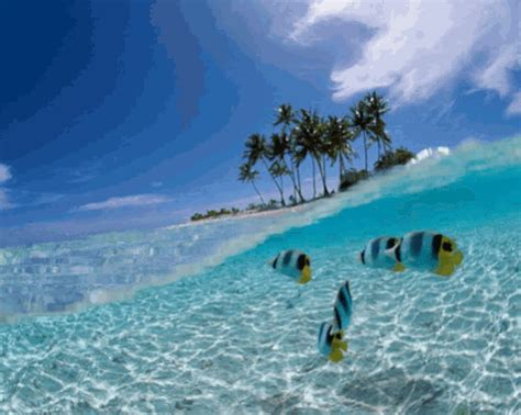tropical gif find share  giphy