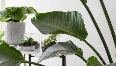 top  hard  kill indoor plants  images indoor