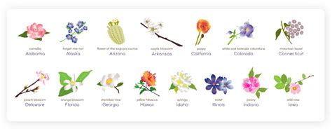 list of state flowers flowering america a breakdown of state flowers