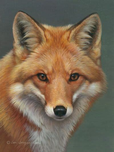 google images fox red fox face drawing google search animals pinterest