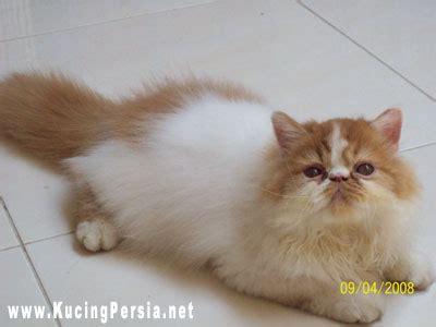 Sho Kucing pet shop