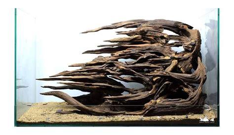 membuat bonsai aquascape akar senggani akarkua