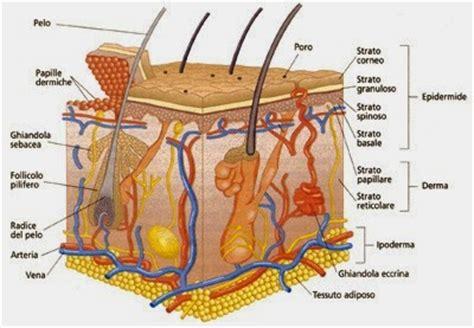 freddo interno al corpo capelli ed unghie come preservarne la naturale
