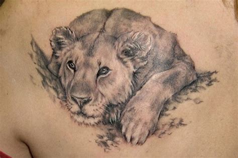 female lion tattoo 26 best lioness tattoos images on lioness