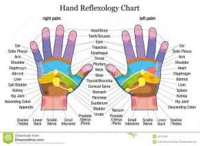 Human internal body parts women humananatomychart info