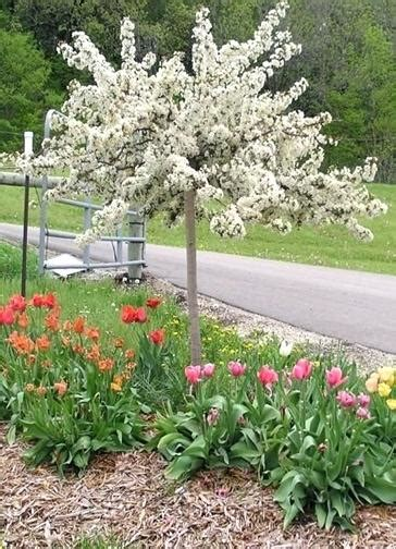 small trees and shrubs for landscaping in front yard hot landscaping small landscaping trees landscape small ornamental trees