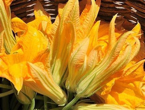 fiori di zucca bello ricevere un mazzo di fiori di zucca paradise