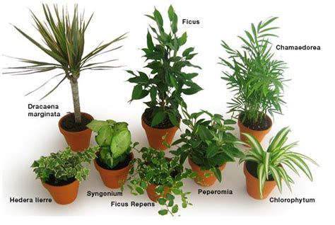 Charmant Plante D Interieur Depolluante #2: plantes-depolluantes.jpg