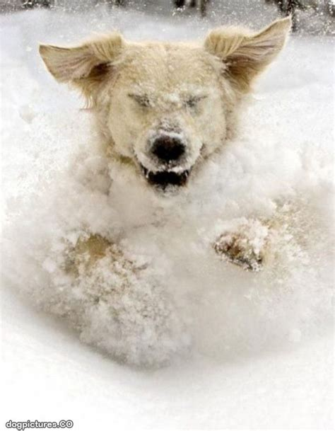 dogs in snow dogs in snow quotes quotesgram