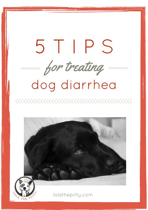 treating diarrhea in dogs 5 tips for treating diarrhea lola the pitty
