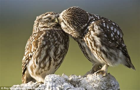 How To Keep Dog From Barking by Give Us A Peck On The Cheek Lovebird Owls Enjoy An