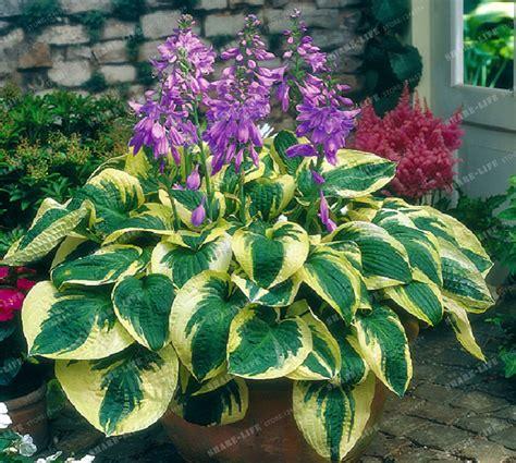 Tanaman Bunga Anggrek Tanah All Tipe 1 bunga lili beli murah bunga lili lots from china bunga lili suppliers on aliexpress