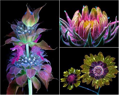 uvb light for plants stunning photographs flowers illuminated ultraviolet light