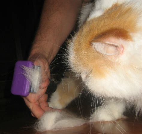 8 Tips On Grooming Your Cat by 10 Cat Grooming Tools You Should In Your Arsenal
