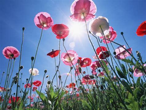 fiori da giardino primaverili fiori primaverili da giardino l elenco pourfemme
