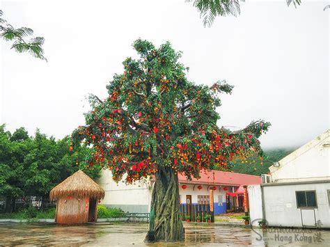 lam tsuen wishing tree new year hong kong lam tsuen wishing trees 林村許願樹 spunktitud3