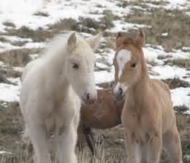 Wild horses running wallpaper beautiful white wild horses running