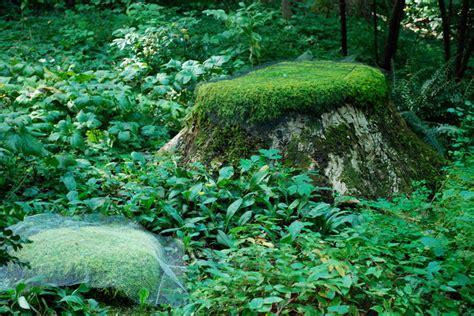 Moss Garden Ideas Moss Garden Traditional Landscape Other Metro By